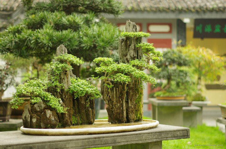 A beautiful, tiny bonsai mountainscape in Baihuatan Park in Chengdu