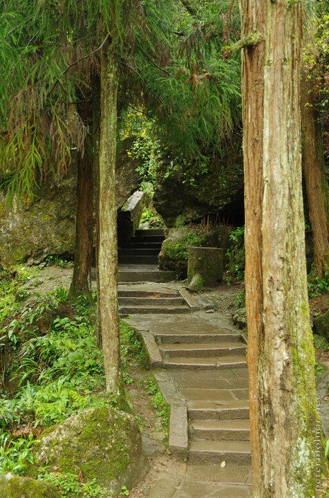 Ancient pines and stairs at the rear peak of Mount Qingcheng