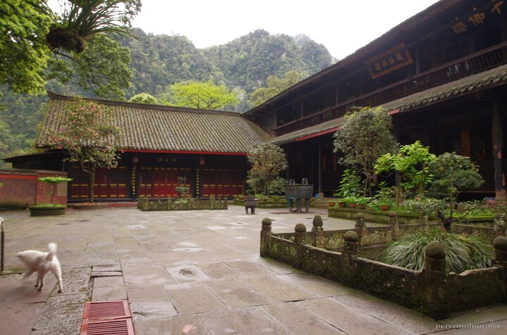 Another monastery garden at Mount Emei - this time with a happy and curious dog
