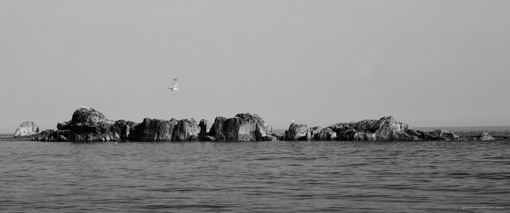 birds-rocks-sea