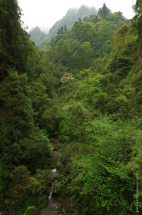 greens-of-emei-2