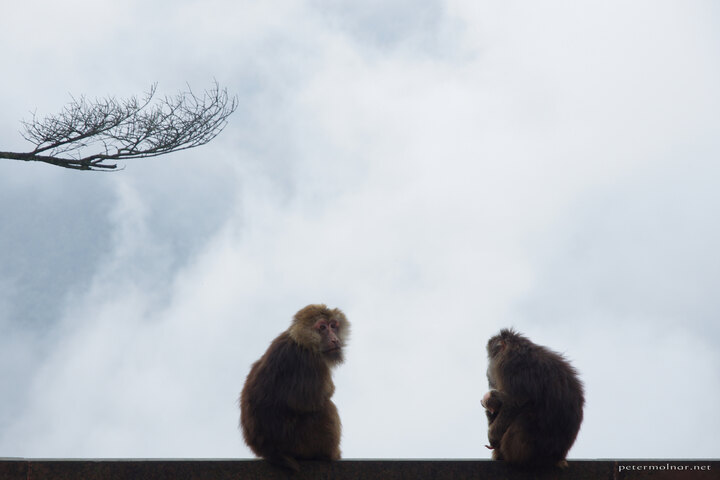 A monkey family sitting on the edge of the monastery, enjoying the view