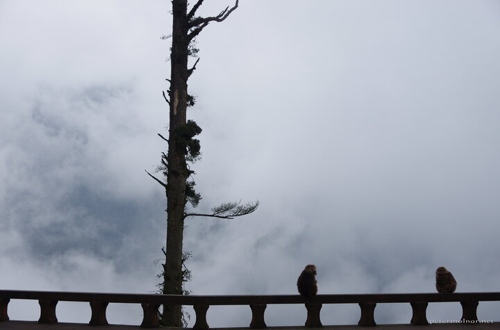 There are moments in your life which you never expect, never anticipate to see: a buddhist temple, with a monkey family, buried in the clouds, where the monkeya sit on the railing to watch the nothingness of the passing fog.