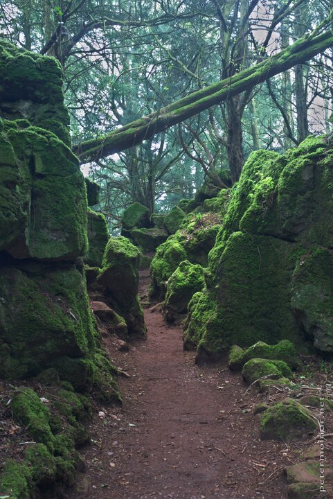 South-West England - Puzzlewood