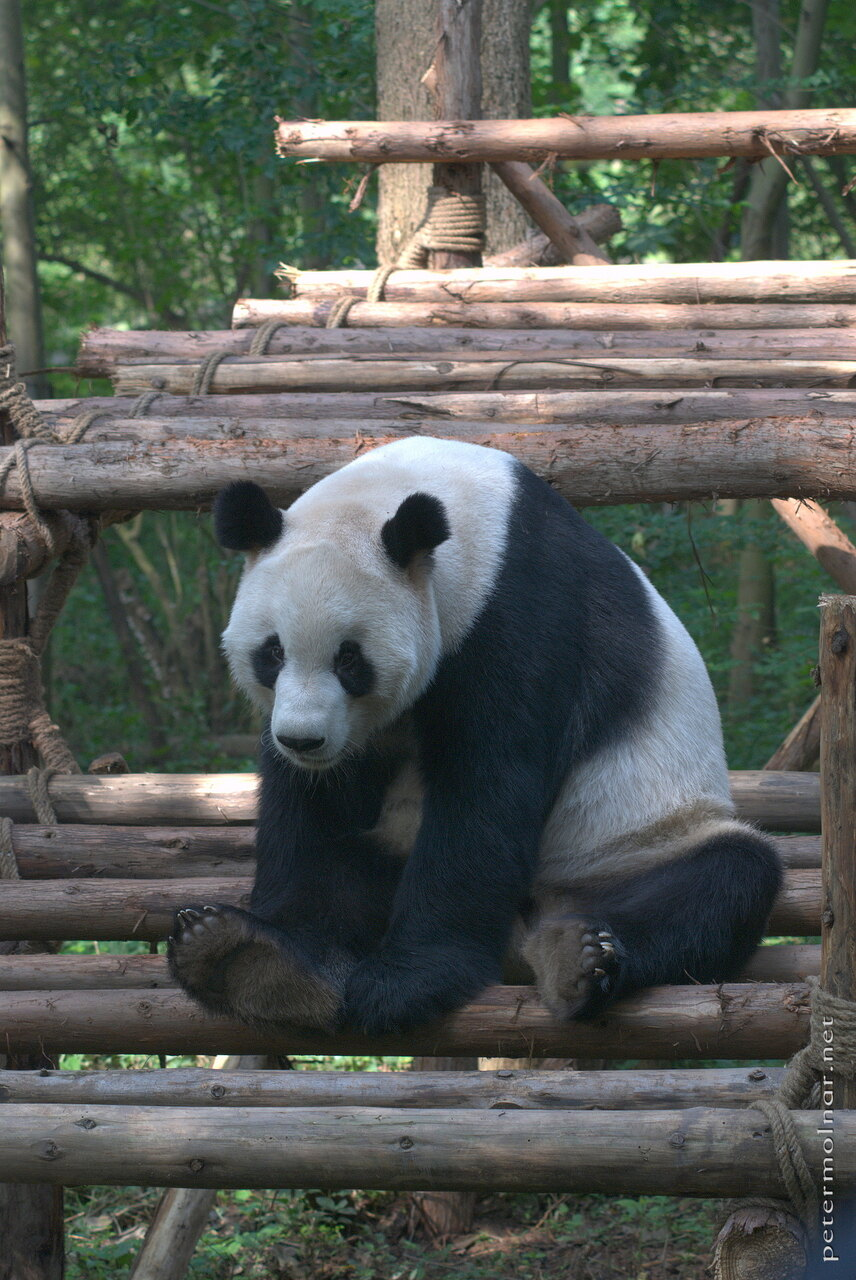 giant pandas the possible end to You are reading this because it is about giant pandas  us financially – your  contribution is what makes stories like you've just read possible.