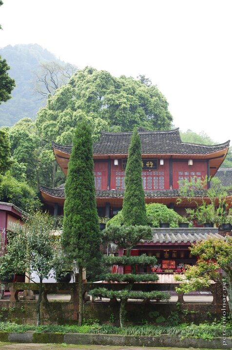 Beautifully cut trees and nicely preserved buildings in the Wannian Temple