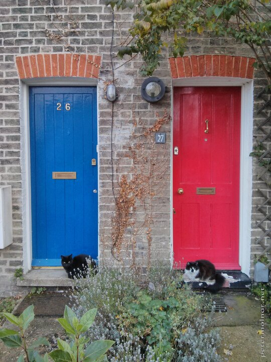 doors with cats