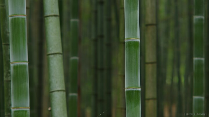 bamboo-lined-path-pattern