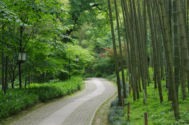 bamboo-lined-path